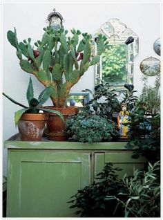 . Indoor plants, cactus, and house plants. All the green and growing potted plants. Foliage and botanical design