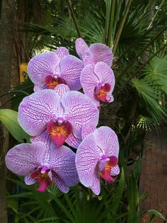 Orchids in the trees at Molly Parker's Garden, Key West. At the Elegant Key West Tree House.' Photo by Barry Fitzgerald.