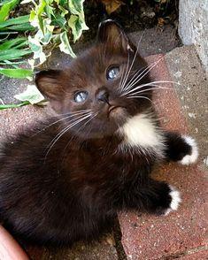 catscenter:    Sweet @ninathethreeleggedcat by catsofworld  baddcats.com baddcats cats cat kittens kitten kitty