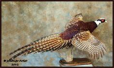 Pheasant, Google Images, Bird, Common Pheasant, Birds