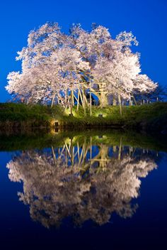 I would like to go to Japan to be taken aback by it's beautiful gardens.  Cherry Blossoms, Japan