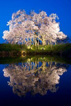 Japan cCerryblossoms Kyusyu Fukuoka