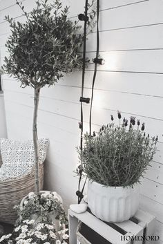 white wine box, lavender, olive tree and lamps! Outdoor Rooms, Outdoor Gardens, Outdoor Life, Outdoor Living, Dream Garden, Home And Garden, House With Porch, Back Patio, Olive Tree