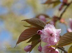 #nature flower by sschimera