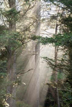 Web resource: Images. Trees of Vancouver. Great images to introduce the unit and explore the temperate rainforest.