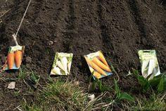 cand se planteaza legumele in gradina Vegetable Garden, Diy And Crafts, Planters, Home And Garden, Organic, Vegetables, Outdoor Decor, Gardening, Tips