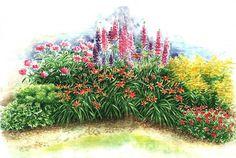 Lupína-dominanta moderných záhrad | Kvety a Záhrada