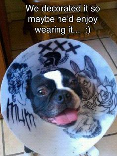 "Dog ""cone of love."" From the defunct Postsecret app.                                                                                               IMAGE TEXT: We decorated it so maybe he'd enjoy wearing it... :)"