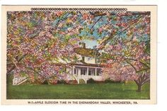 Apple Blossom Time in the Shenandoah Valley Winchester Virginia VA Old Postcard Postmarked 1943 Red Cross War Fund
