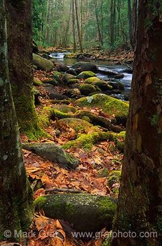 Smokey Mountains Stream