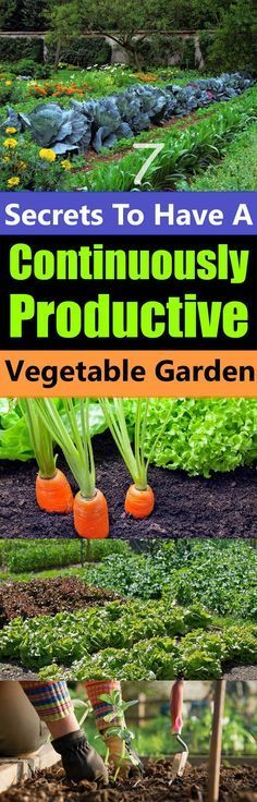 Don't you want a garden that will not only produce a bountiful harvest of fresh vegetables but also produce them continuously?