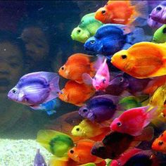 Beautiful colorful fish...looked at the reflection of the amazed kid in the background, awesome