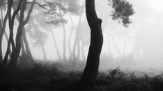 Andreas R. Mueller - Photography: Black and White - Forest Photography