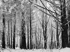 Toscane, Italy, 2017. Ellen Brandwijk Photography. Trees, Snow, Plants, Outdoor, Stuff Stuff, Outdoors, Tree Structure, Plant, Outdoor Games