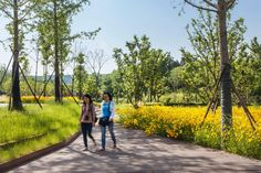 NiushoushanPark_HASSELL_JohnsonLin_07 « Landscape Architecture Works | Landezine landschap park pad bloemen tuin geel