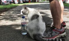 A Cat And It's Human – Sunday's Daily Jigsaw Puzzle