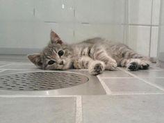ラブリー-KittyCats、iqdownloading:これはチャーリーですが、彼は私の子猫です....