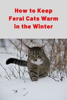 It's getting cold out and many places already have snow! Feral cats may be used to living outside, but during the winter months they can use a little help from us! Feral Cat Shelter, Feral Cats, Large Animals, Animals And Pets, Cat Shelters For Winter, Pet Sitters International, Dog Safety, Safety Tips, Foster Animals