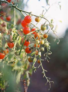 Vegetable Salad, Engagement, Dinner, Vegetables, Salads, Blog, Photography, Dining, Photograph