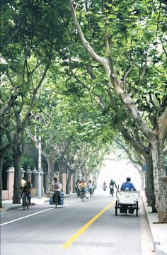 French concession, Shanghai- bigger than you think! Love the trees. http://www.townscapehousing.com/area/french-concession.html