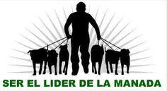 ASESORAMIENTO EN CLUBS DE ADIESTRAMIENTO Y RESIDENCIAS CANINAS  En ésta sección, pretendemos asesoraros sobre residencias caninas y clubs de adiestramiento canino en Valencia .