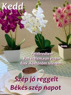 Happy Day, Humor, Plants, Pink, Humour, Funny Photos, Plant, Funny Humor, Pink Hair
