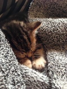 """""""A little sleeping cat is an I age of perfect beatitude."""" --Jules Champfleury"""