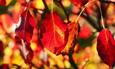 En este vídeo de jardinería de Bricomanía, Iñigo Segurola plantará diferentes arbustos para conseguir un pequeño parterre otoñal en color ro...