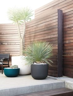 Garden Screening Ideas - Screening can be both ornamental and also functional. From a well-placed plant to maintenance totally free fence, here are some creative garden screening ideas. Large Backyard Landscaping, Backyard Garden Design, Patio Design, Backyard Patio, Landscaping Ideas, Desert Backyard, Modern Backyard Design, Inexpensive Landscaping, Modern Courtyard