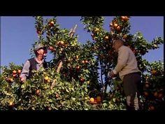 frutta fresca igp, spot divertenti