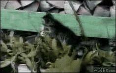 Kitten-cactus-bongos