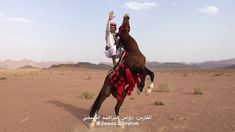 The best Arab horse rider (Saudi Arabia) Royal Brides, Les Oeuvres, Camel, Good Things, Horses, Animals, 2d, Gifs, Youtube