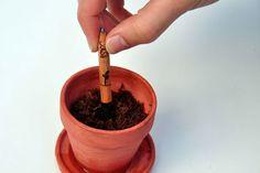 Sprout... O lápis que se transforma em ervas aromáticas, flores ou vegetais quando pensávamos que estava a chegar ao fim dos seus dias. Genial!!