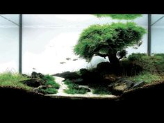 amano style planted aquarium - Google Search