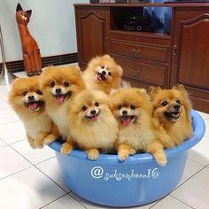 Bucket of trouble!