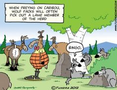 tundra comics' humor is right up my alley.. lots of people roll their eyes, but i throw my head back and laugh.. ;)
