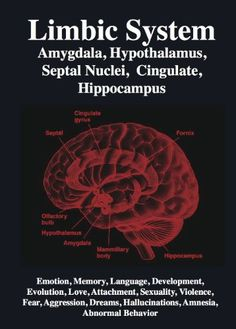 attachment amygdala - Google Search
