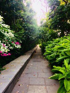 Sidewalk, Green, Photography, Photograph, Side Walkway, Fotografie, Walkway, Photoshoot, Walkways