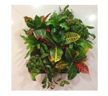Vangrow Framed Wall Planter | Suite Plants