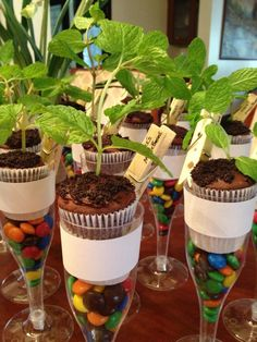 Jack and the beanstalk cupcakes with magic beans