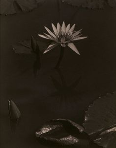 The Lily, Mount Kisco, 1918 Charles Sheeler