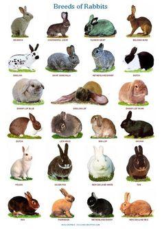 450 Ideas De Conejos Conejos Jaulas De Conejos Razas De Conejos