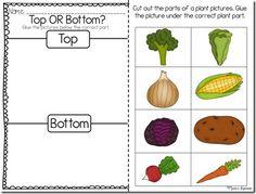 Plants, Plant Activities, Parts of a Plant, Plant Life Cycle First Grade Science, Kindergarten Science, Kindergarten Worksheets, Teaching Science, Science Activities, Art Worksheets, Teacher Worksheets, Preschool Garden, Preschool Classroom