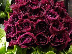 紫の薔薇 イントゥーリーグ