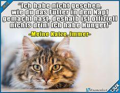 Typisch Katzen ^^' #Katzenliebe #Katzen #Katze #sowahr #lustigeBilder #funny