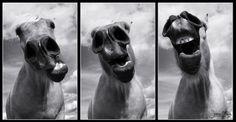 Jamie O'Hara Photography Horse Photography