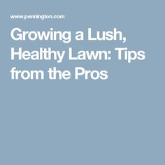 Growing a Lush, Healthy Lawn: Tips from the Pros