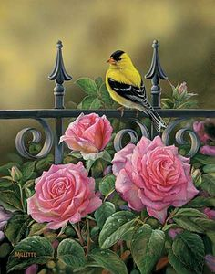 "Wildlife Experience ""Backyard Beauties-Goldfinch"" Original Acrylic Painting by Rosemary Millette"
