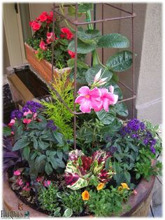 Love the color combination & trellis for flowering vine to give some height..  FarWest Custom Potting Boise 853-4000 ask for Stacy