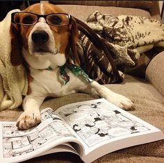 """This is a very nice paw rest and I still don't know how to read."" 